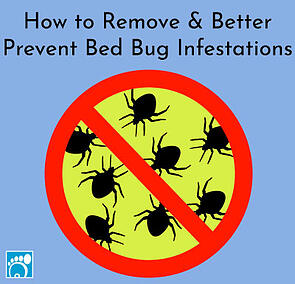 how to remove and better prevent bed bug infestations