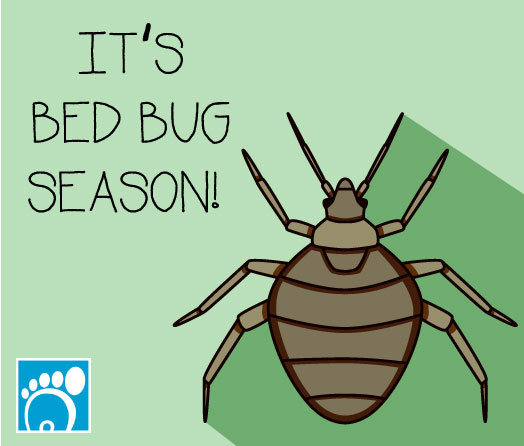 it's bed bug season